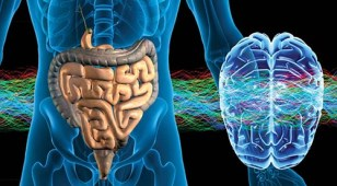 brain-gut-connection